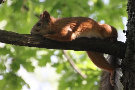 2013-06-orava